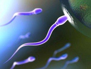 сперматазоид
