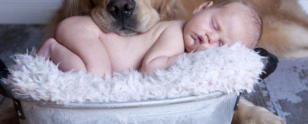 Животные и новорожденный