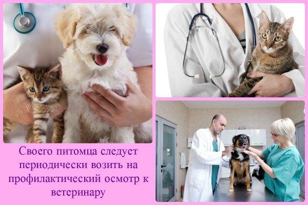 Домашние животные у ветеринара