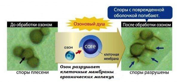Озон разрушает клеточные мембраны болезнетворных клеток