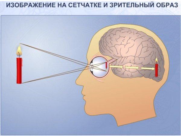 Схема восприятия изображения