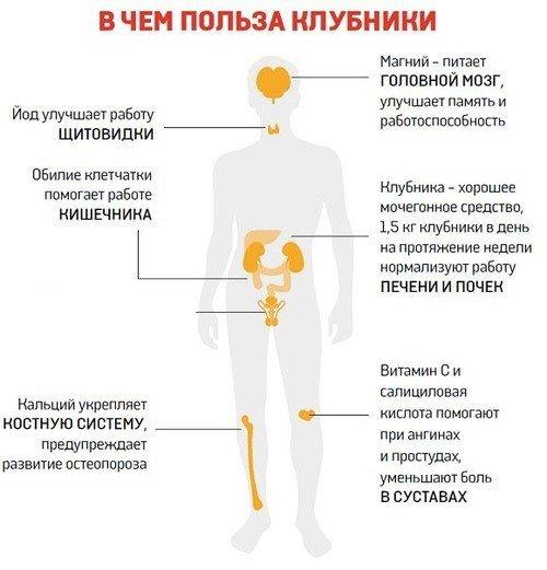 влияние клубники на организм