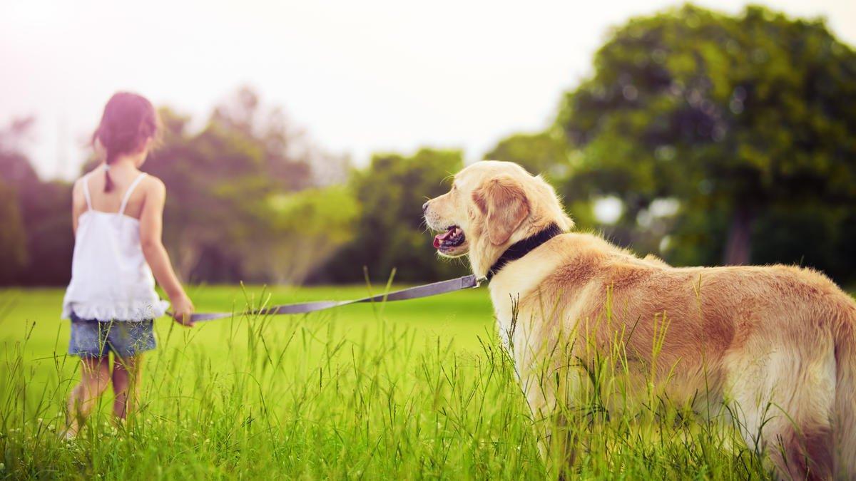 Аллергия на собак у детей: симптомы, лечение, профилактика