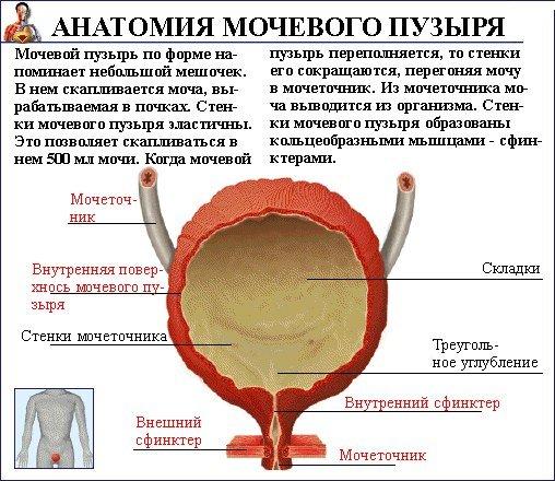 Чем опасно воспаление мочевого пузыря: вся правда о цистите