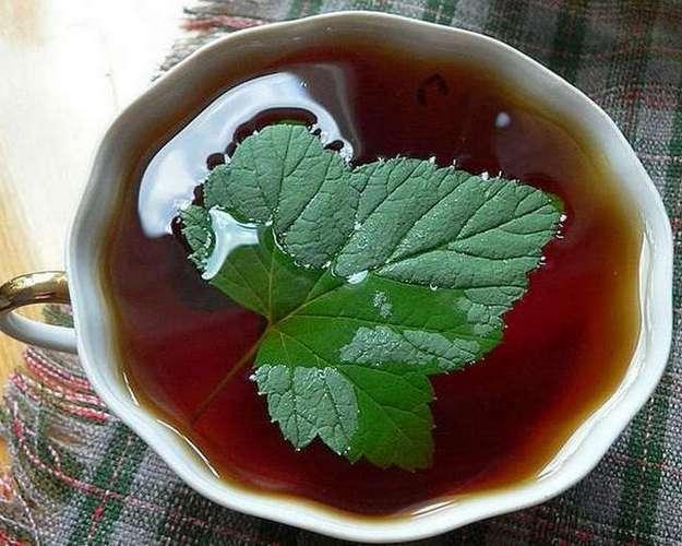 Чай с листьями смородины при беременности