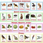 Животные, птицы, овощи и фрукты