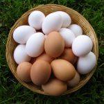 Яйца куриные, сваренные вкрутую