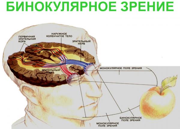 Бинокулярное зрение