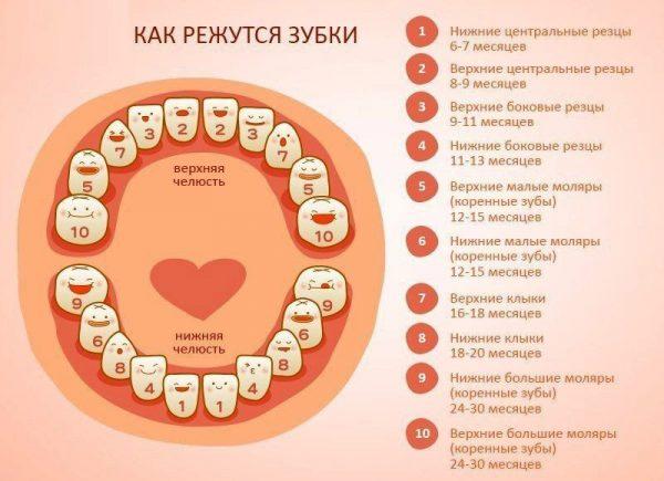 Схема роста зубов
