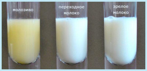 Сравнение молозива и зрелого молока
