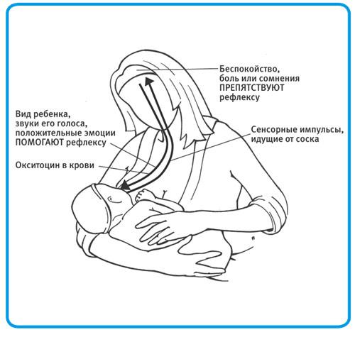 Механизм действия окситоцина