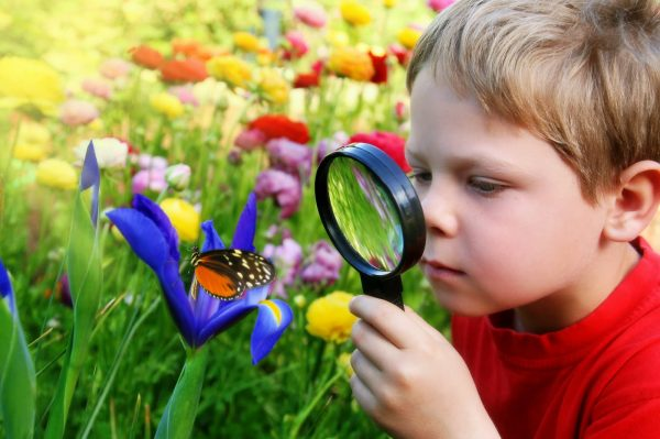 Ребёнок рассматривает бабочку через лупу