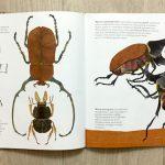 «В мире жуков. Интересные факты о животных»