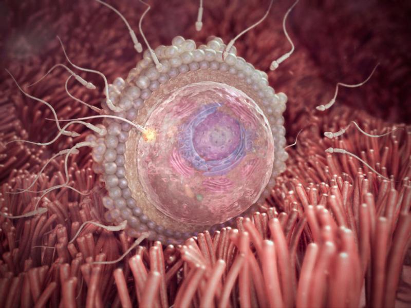 Беременность, опасная для жизни: внематочная беременность во всех её проявлениях